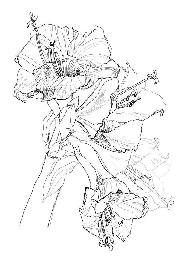Hibiscus flower royalty free illustration