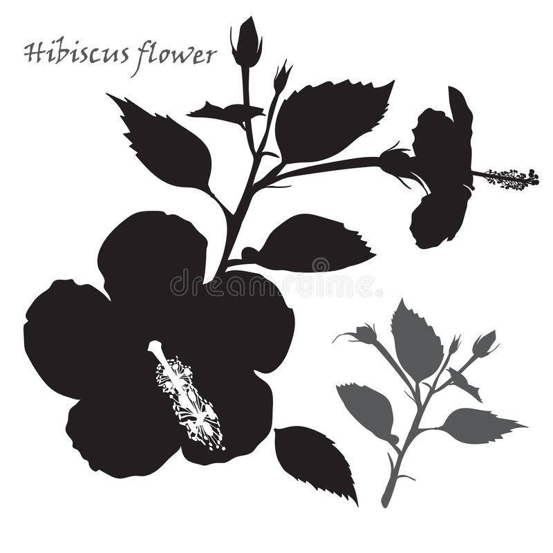 Hibiscus flower. Black silhouette on white background royalty free illustration