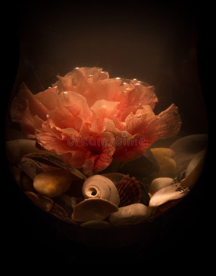 Hibiscus Flower in the dark under water royalty free stock photos