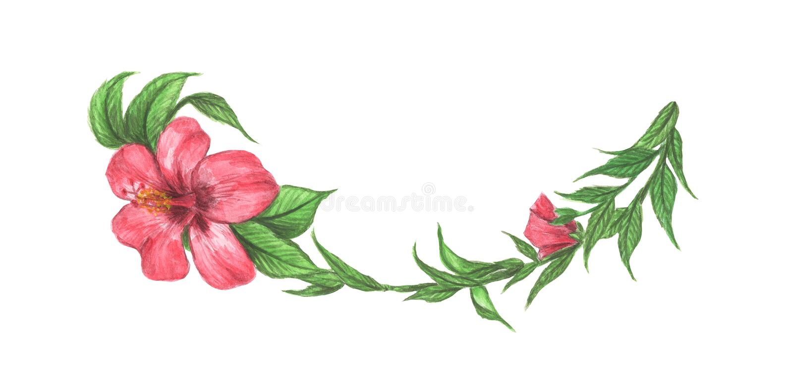 Hibiscus flower and leaves. Line borders, laurels and text divider. Watercolor illustration royalty free illustration