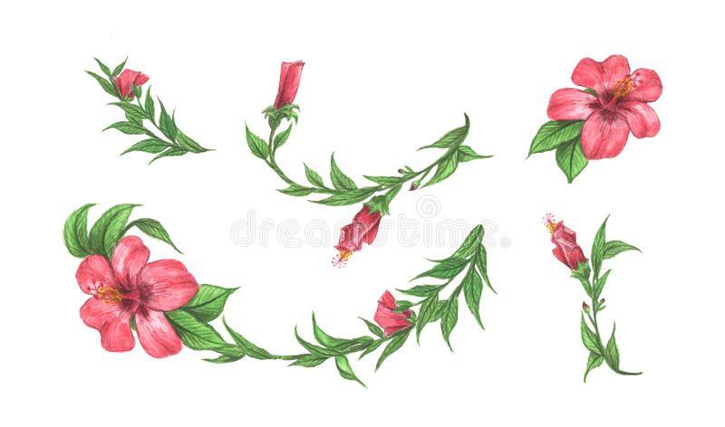 Hibiscus flower and leaves set. Line borders, laurels and text divider. Watercolor illustration royalty free illustration