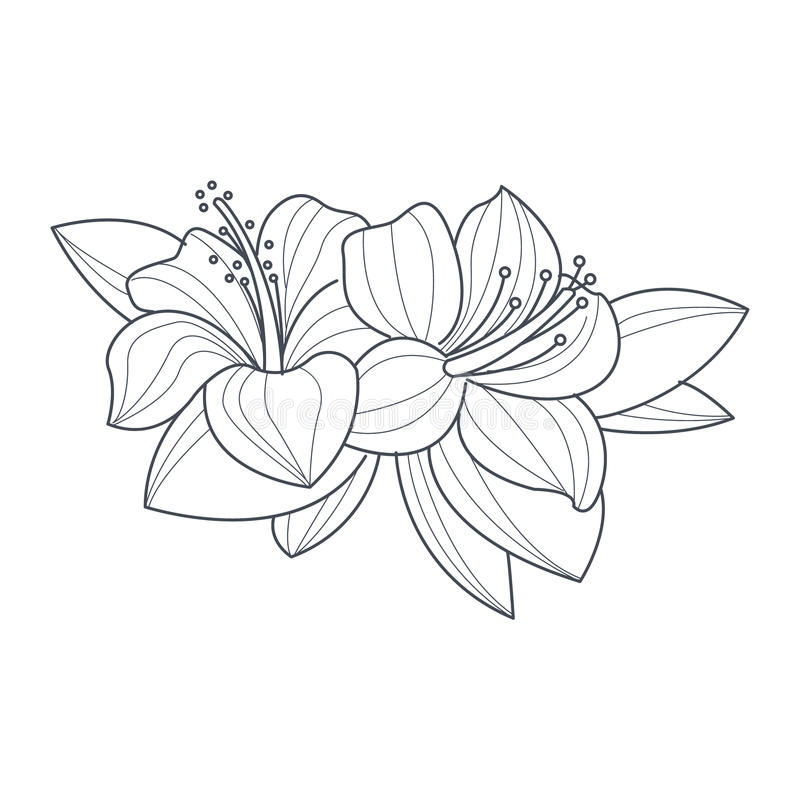Download Hibiscus Flower Monochrome Drawing For Coloring Book Stock Vector