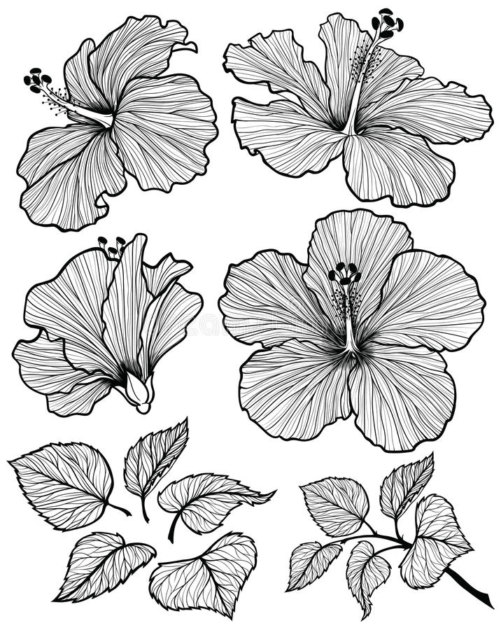 Hibiscus flower set vector illustration