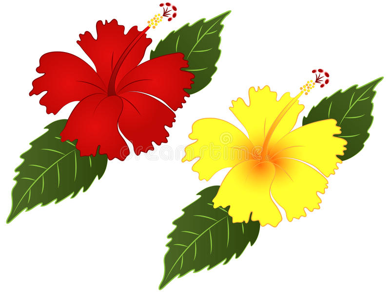 hibiscus flower vector illustration clipart stock photo rh dreamstime com hibiscus clip art images hibiscus clip art yellow
