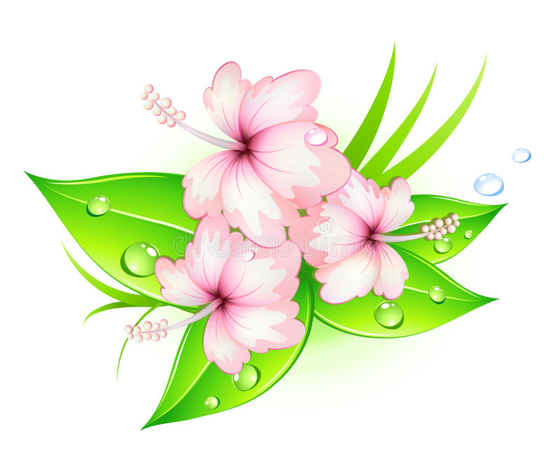 Download Hibiscus flowers stock vector. Image of illustration - 20212834