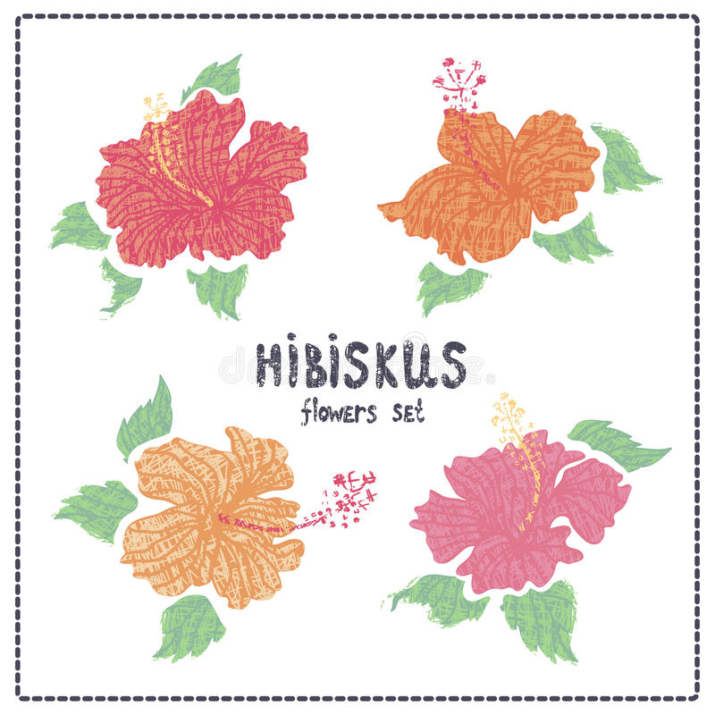 Hibiscus flowers vector set stock illustration