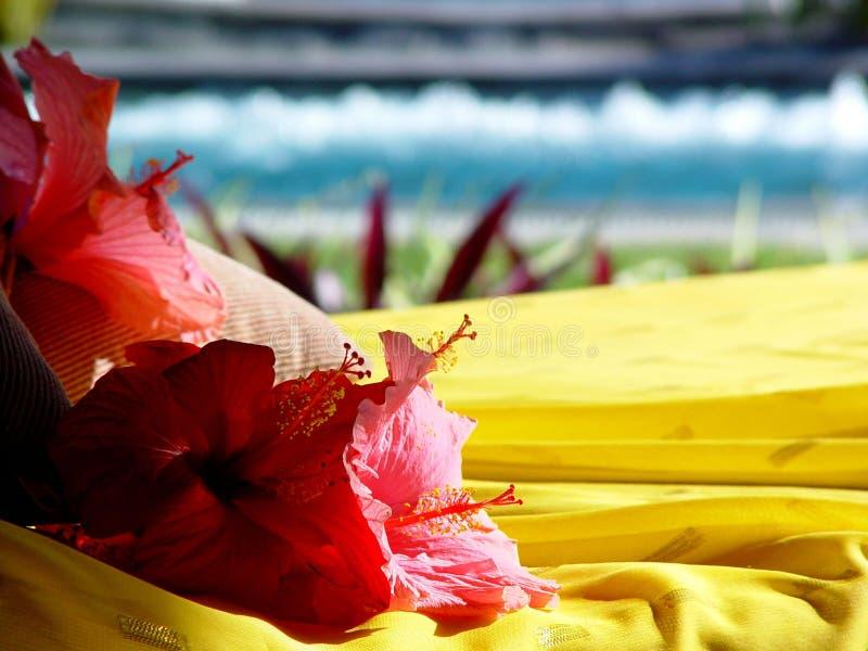 Hibiscus, Rücksortierung, Mauritius lizenzfreie stockfotos