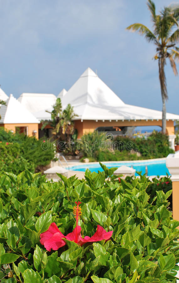 Download Hibiscus and resort pool stock photo. Image of lodging - 20495500