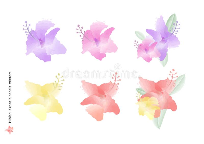 Hibiscus rosa sinensis flowers vectors and leaves with watercolor brush isolated on white background, beautiful floral element des stock illustration