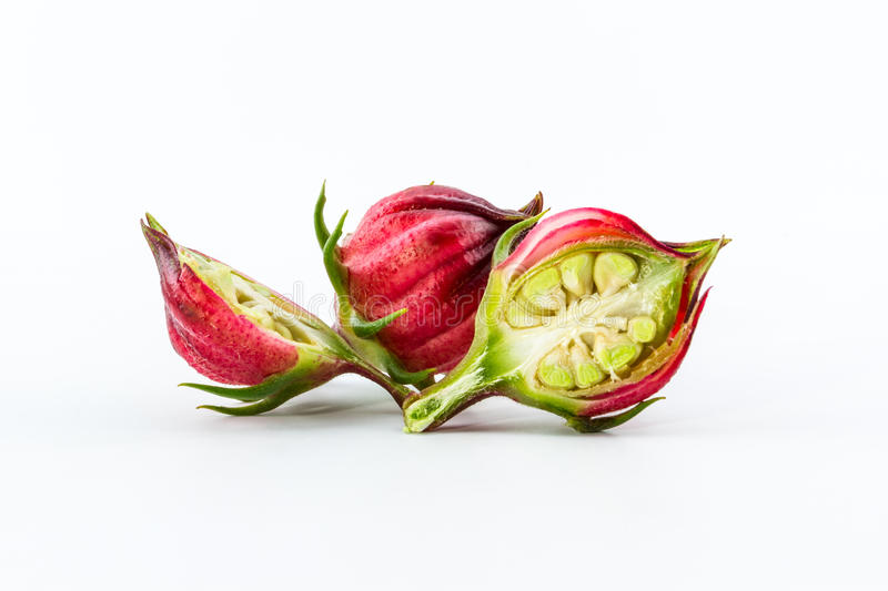 Hibiscus sabdariffa or roselle fruits. royalty free stock photo