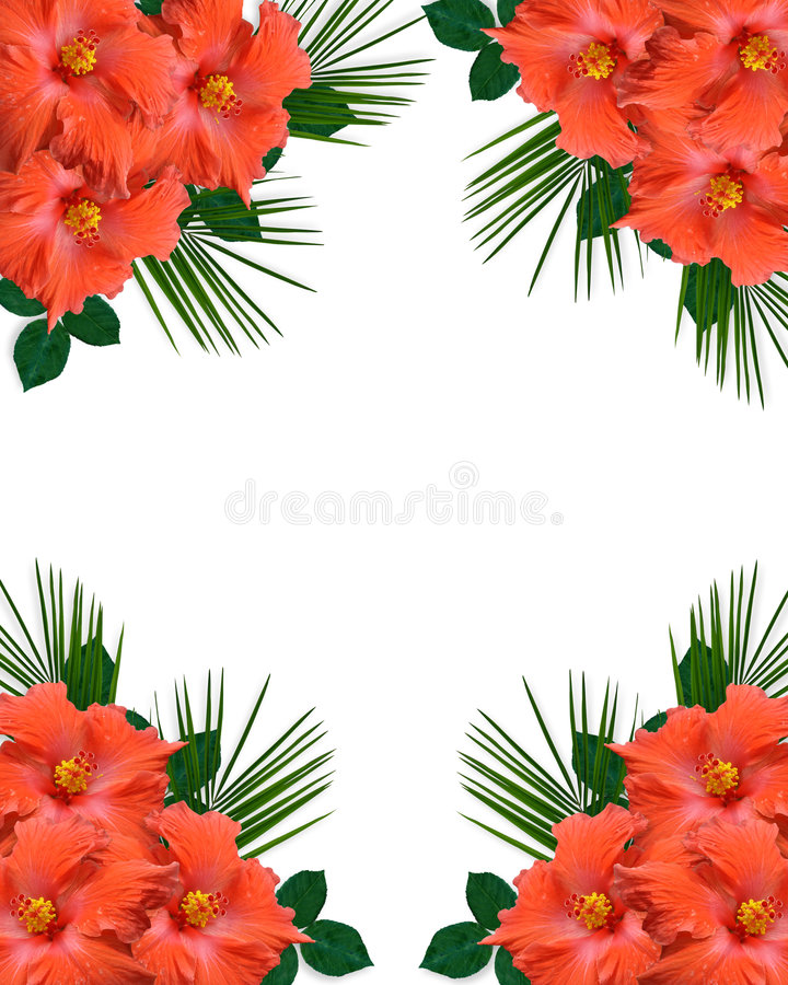 Hibiscus tropical Flowers border vector illustration