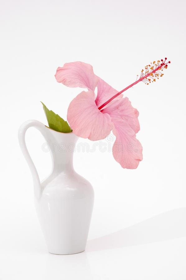 Hibiscus in a vase stock images