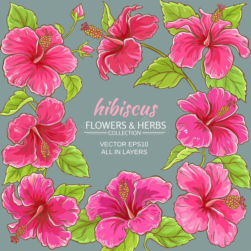 Hibiscus vector frame. Hibiscus flowers vector frame on color background royalty free illustration