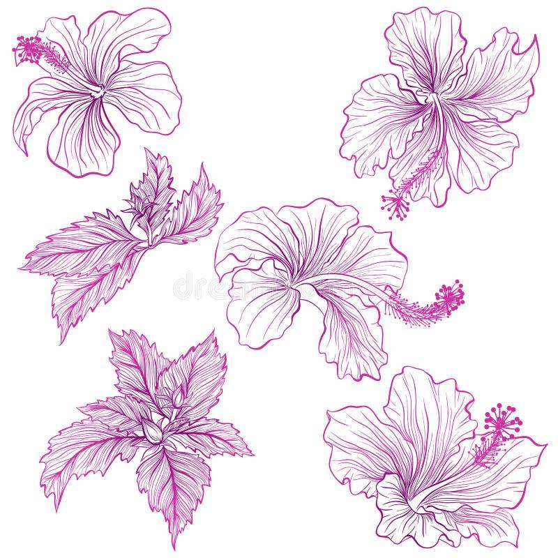 Hibiscus royalty free illustration