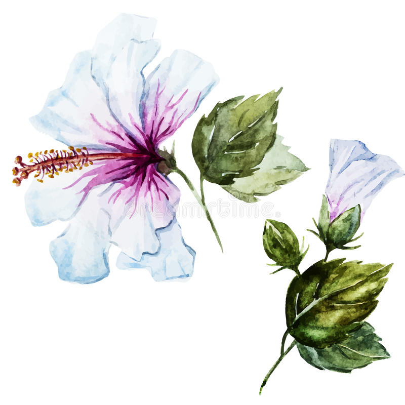 Hibiscus Watercolor λουλούδι ελεύθερη απεικόνιση δικαιώματος