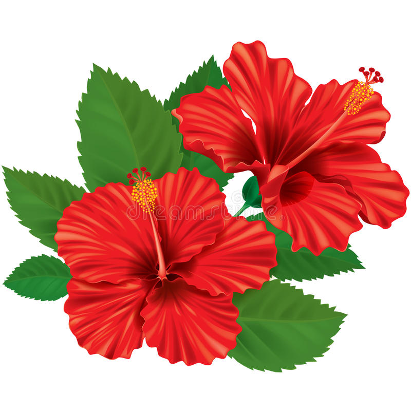 Hibiscusblume lizenzfreie abbildung