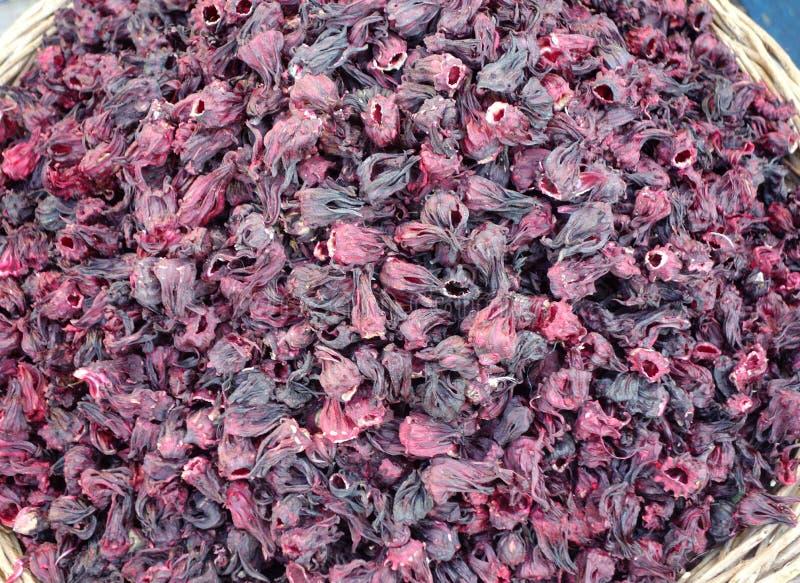 Hibiskus dichte omhooggaand stock afbeeldingen