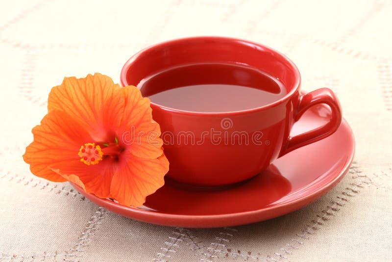 hibiskus herbaty. zdjęcie stock