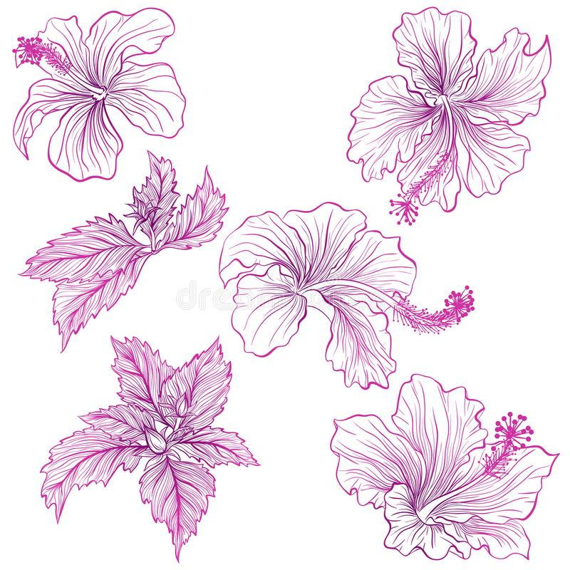 hibiskus royaltyfri illustrationer