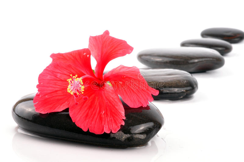 hibiskusbrunnsort arkivfoto
