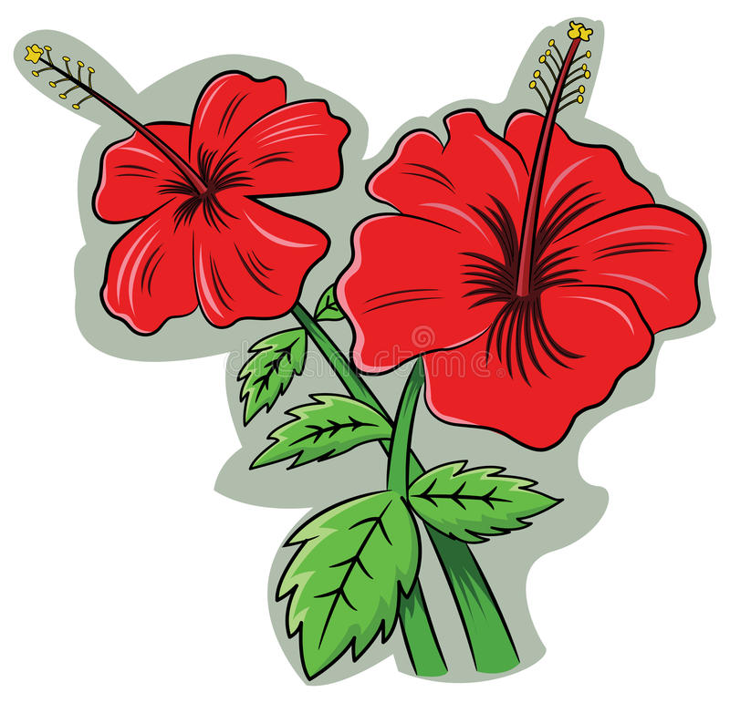 hibiskusrosa sinensis stock illustrationer