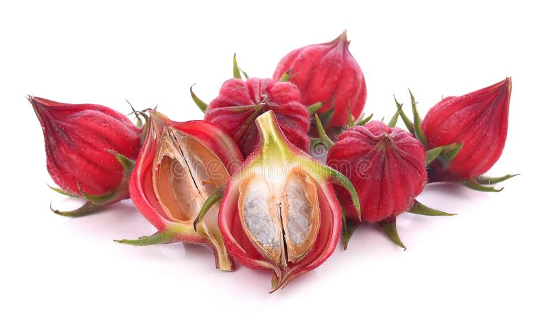 Hibiskussabdariffa- eller rosellefrukter som isoleras på den vita backgrouen arkivbild