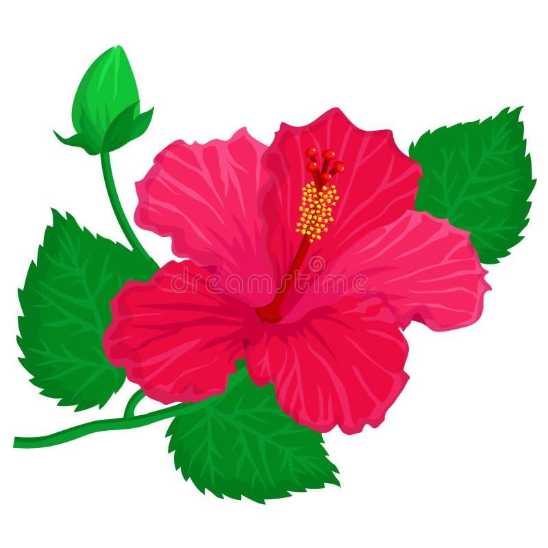Hibisus blomma stock illustrationer