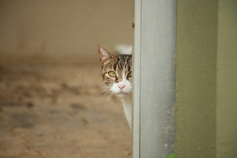 Hidden Cat royalty free stock photography