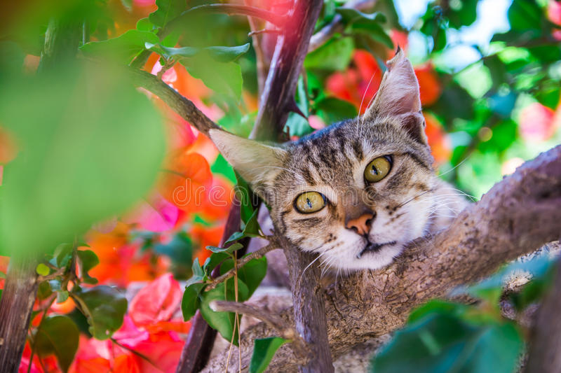 Hidden cat. Cat hiding in the bushes with flowers on a hot summer day stock photos