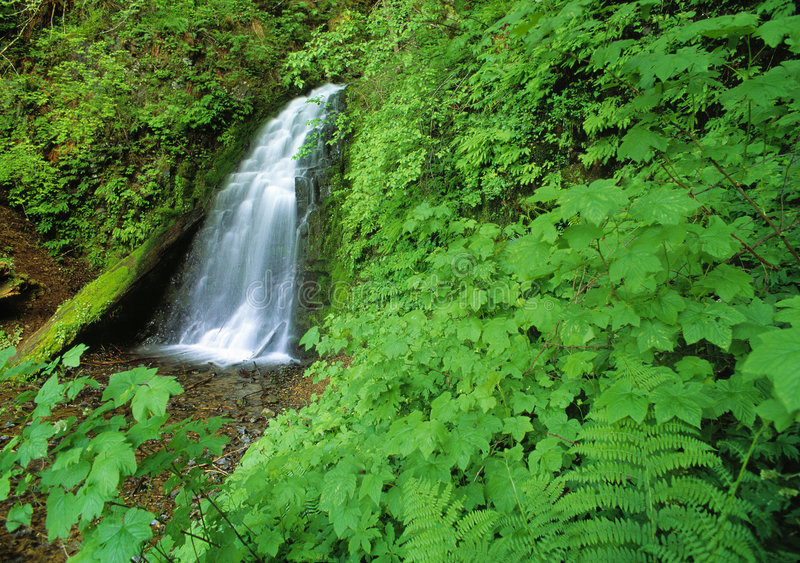 Hidden Falls stock photos