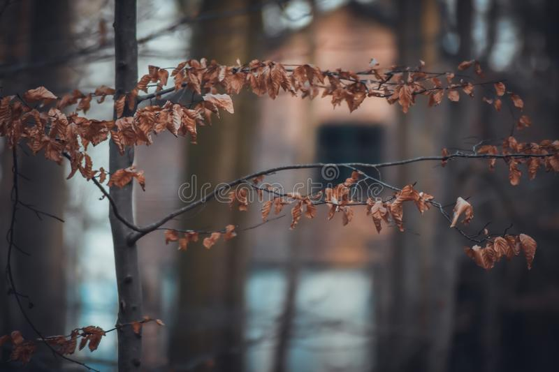 Hidden House by the forest stock images