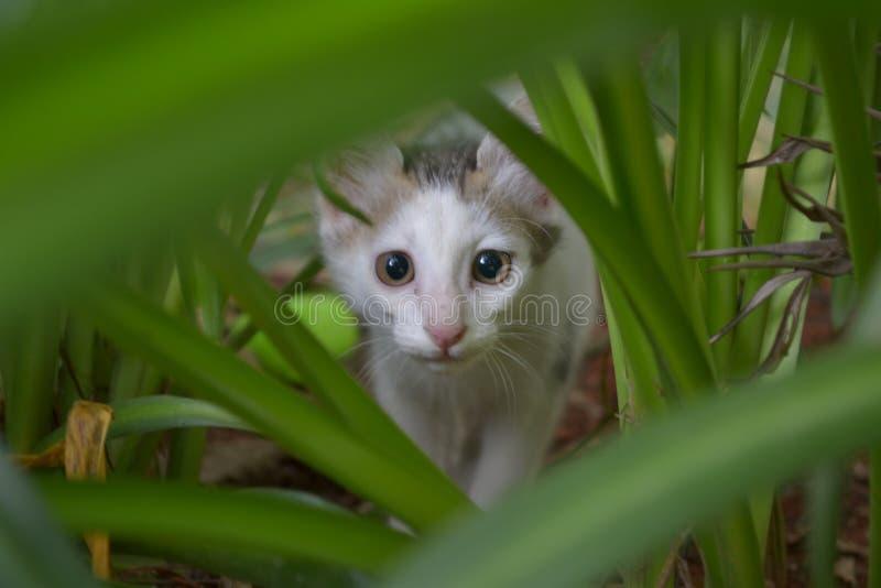Hidden kitten royalty free stock photography
