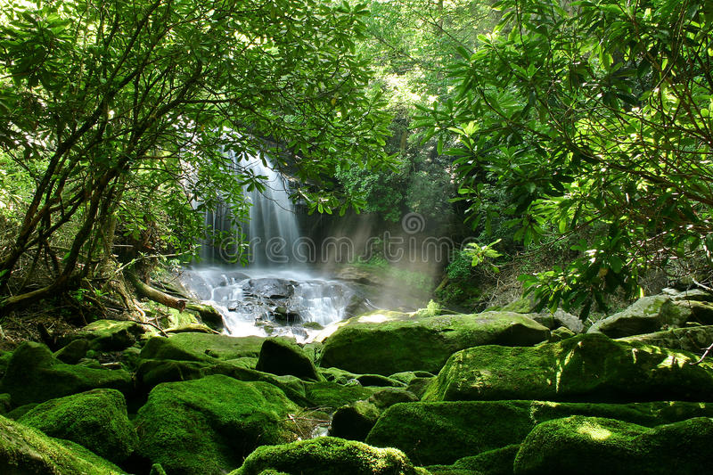 Hidden Rain Forest Waterfall. A large waterfall in North Carolina's Appalachian Mountains is hidden by lush foliage and mossy rocks royalty free stock images