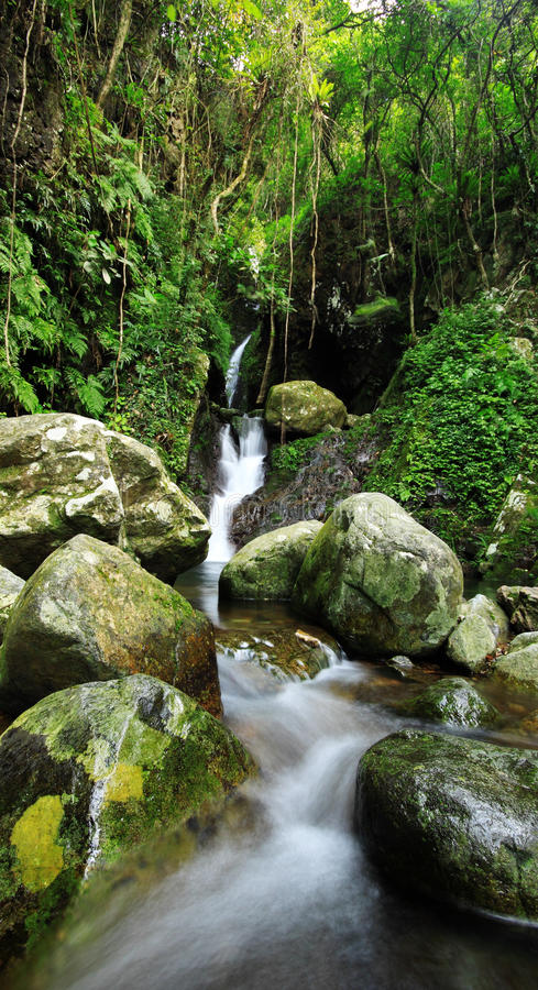Download Hidden Rain Forest Waterfall Stock Photo - Image: 20727994