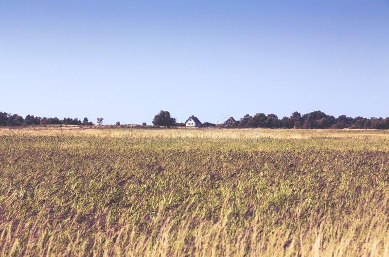Hiddensee hedlandskap med den vita stugan arkivfoto