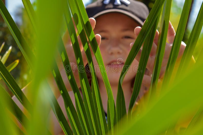 Hidding behind the green leaves royalty free stock images