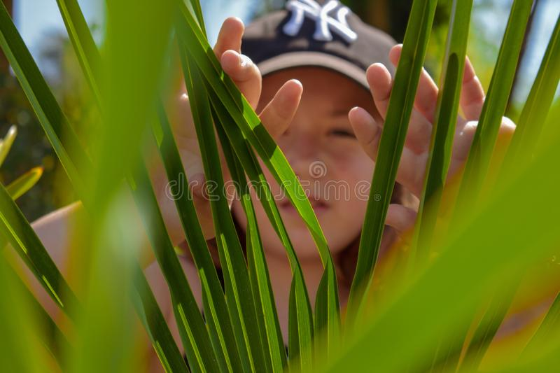Hidding behind the green leaves royalty free stock photography