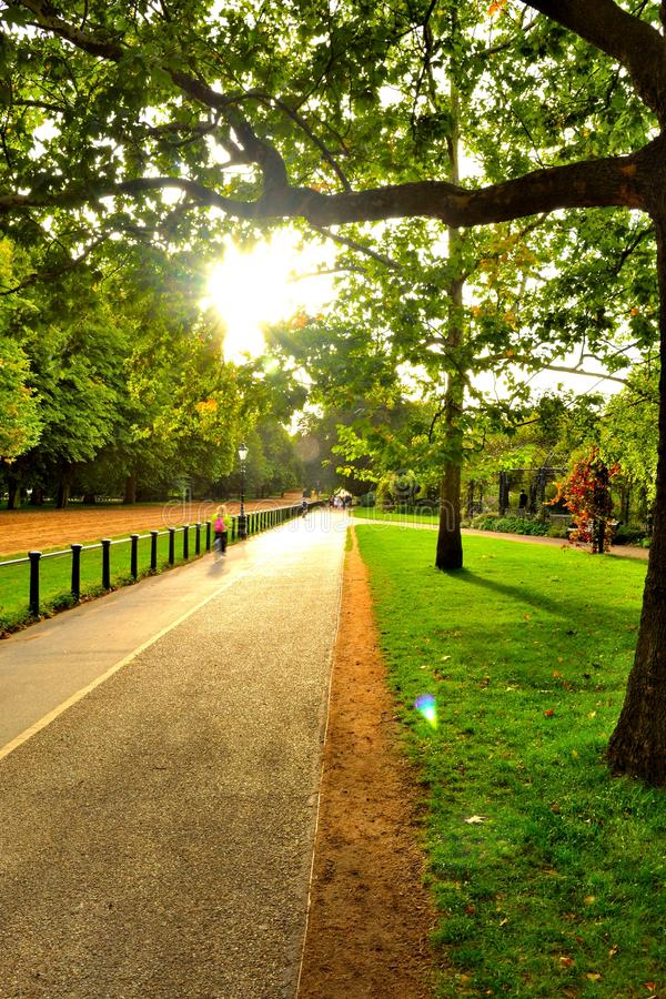 Download Hide Park stock image. Image of outdoor, trees, sunset - 25614631
