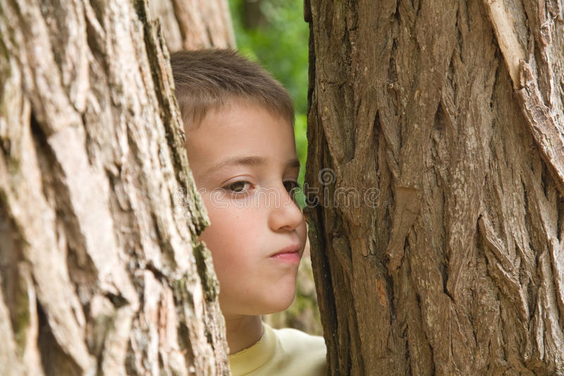 Download Hide-and-seek Stock Photo - Image: 10587300