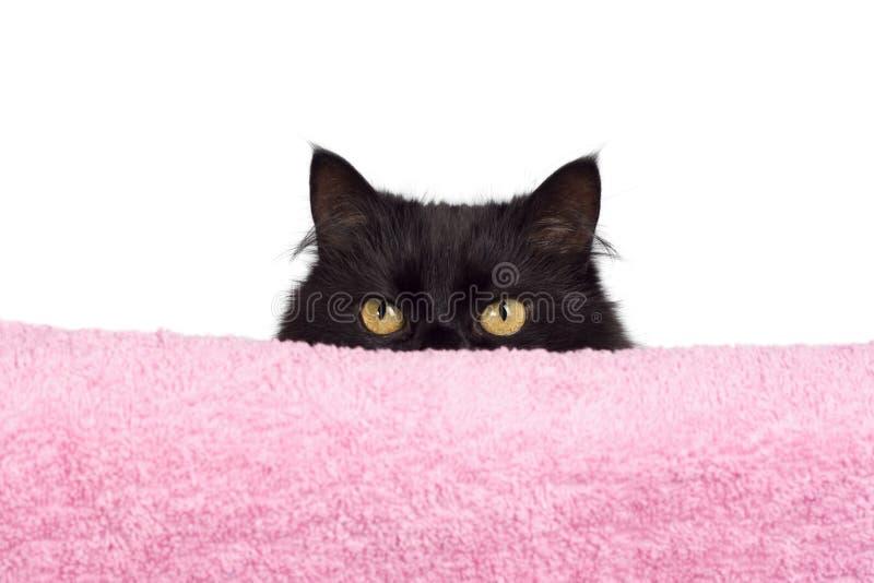 Hiding Black Cat Stock Photos