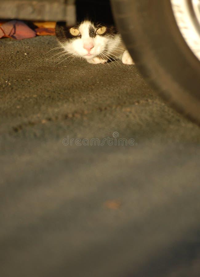Hiding Cat. A small cat hiding underneath a car stock photo