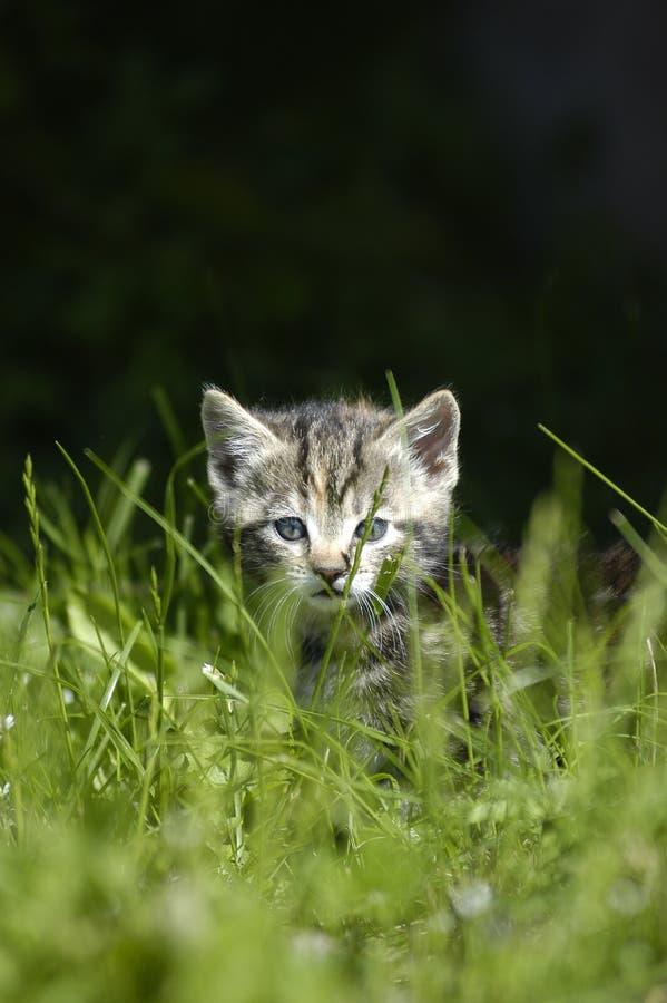 Free Hiding Cat Royalty Free Stock Photo - 4868195