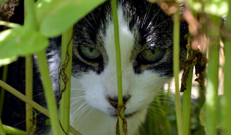 Hiding cat stock images
