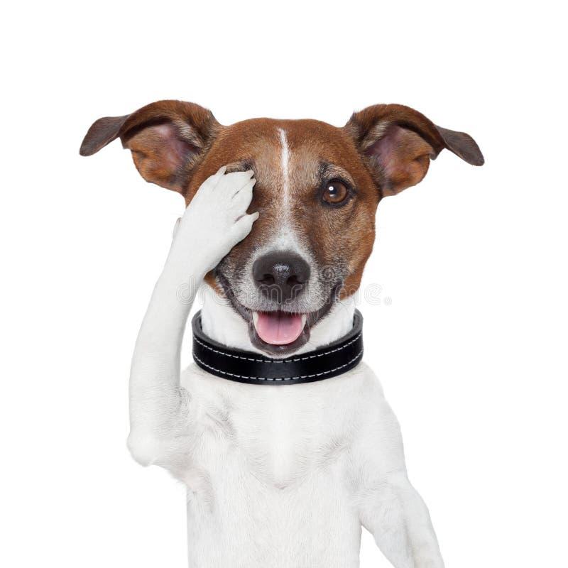 Hiding covering eye dog stock photography