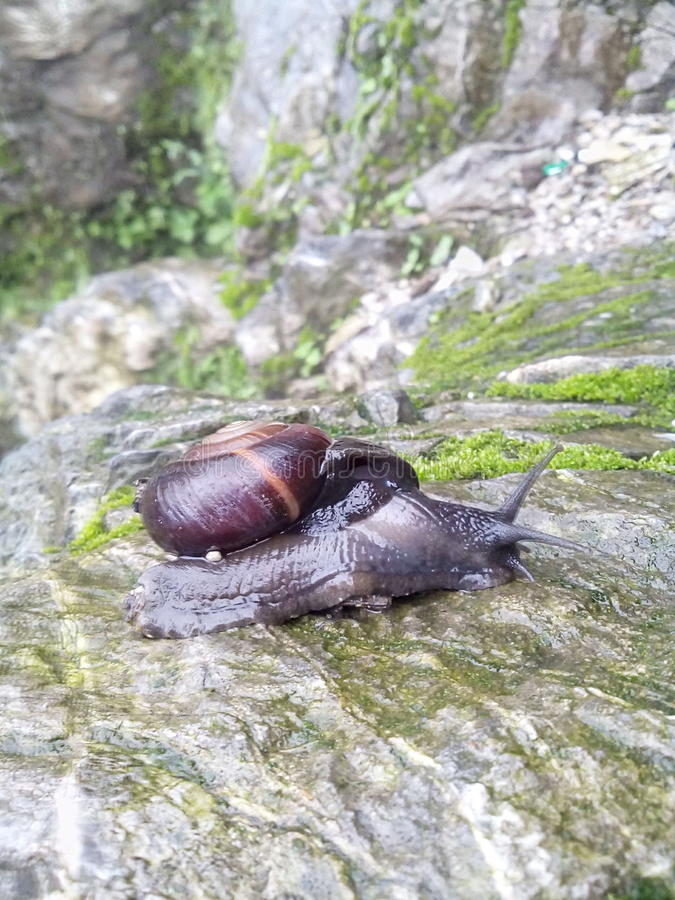Hiding Snail stock images