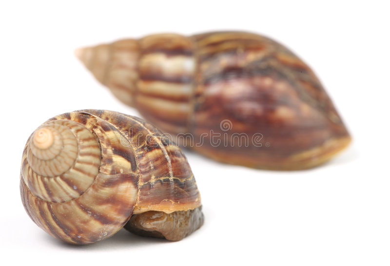 Hiding Snails Stock Photo