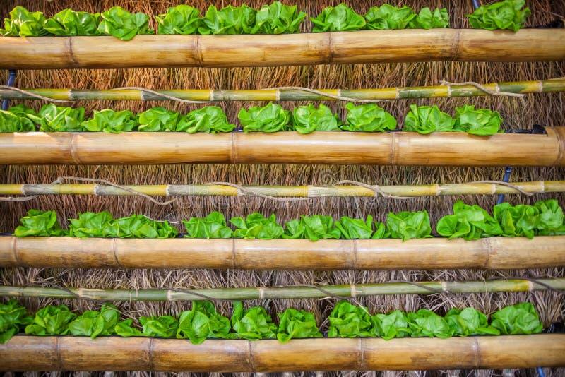 Hidro vegetais coloridos imagens de stock