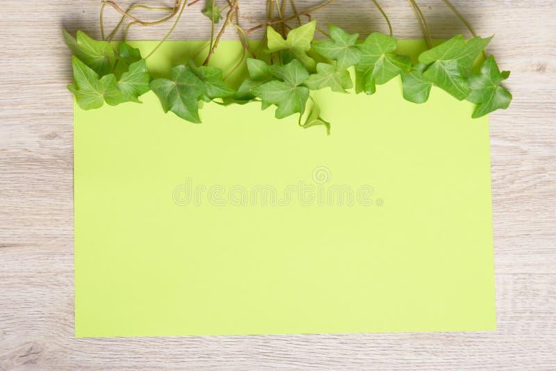 Hiedra en el papel del color fotografía de archivo libre de regalías