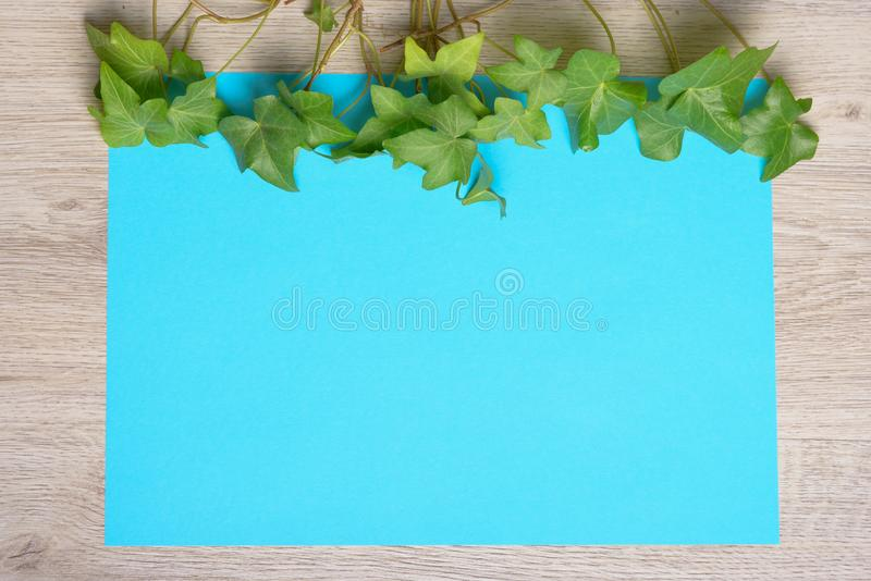 Hiedra en el papel del color imágenes de archivo libres de regalías