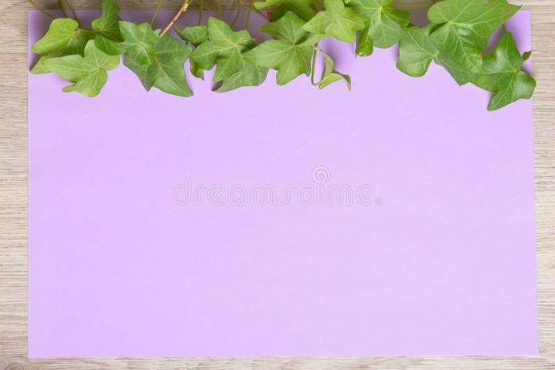 Hiedra en el papel del color foto de archivo libre de regalías